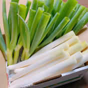 池ちゃん農園の白ネギ 1kg+おまけ付き 約1.0kg (10〜12本) 野菜(ねぎ) 通販