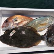 【瀬戸内産】岡山県の鮮魚BOX1.5キロ〜3キロ前後、送料込み 1.5〜3キロ前後。増える場合もあります 魚介類 通販