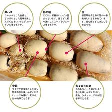 武井のれんこん 6kg (3kg+3kg) 6kg (3kg+3kg) 野菜/蓮根通販