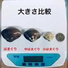 九十九里産天然 小はまぐり3キロ 3キロ 魚介類/蛤通販