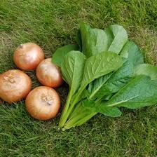さくま農園「おまかせ野菜セット」 約1.0~3.0㎏ 野菜/セット・詰め合わせ通販
