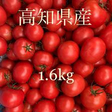 土佐のフルーツトマト 1.6kg 野菜/トマト通販