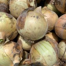 訳あり!福玉 3キロ 3キロ 野菜/玉ねぎ通販