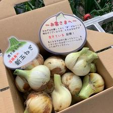 ❣️訳ありかも10kg‼️玉ねぎ大国淡路島からの新玉ねぎ‼️特別栽培農産物 訳あり新玉ねぎ10kg 野菜/玉ねぎ通販