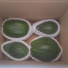 【農カレンダー付き】東京青パパイヤ2キロ(農薬化学肥料不使用) 2キロ 野菜/その他野菜通販