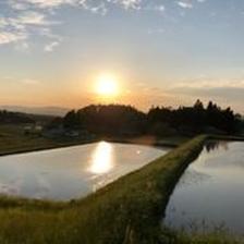 EM栽培米 残留農薬0ゼロの米 岩手県産ひとめぼれ   5㎏ 米/その他米通販