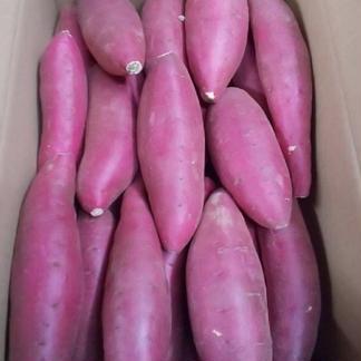シルクスイート5キロLサイズ 5kg 野菜/さつまいも通販