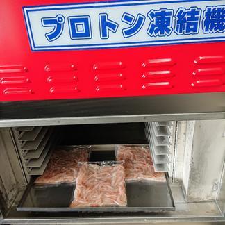 生白えび殻付き(プロトン凍結)100g 100g 魚介類/エビ通販