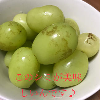 シャインマスカット 粒サイズ不揃い 1.5kg 1.5kg 果物/ぶどう通販