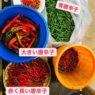 ワカイファーミーの唐辛子詰め合わせセット🌶💕 4袋 野菜/香辛料通販