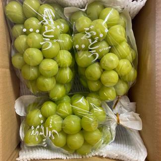 K&Y  シャインマスカット 約2キロ(3〜4房程度) 果物/ぶどう通販