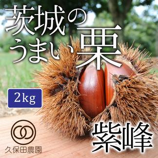 茨城のうまい栗(紫峰)約2kg/Lサイズ 約2kg 果物/栗通販