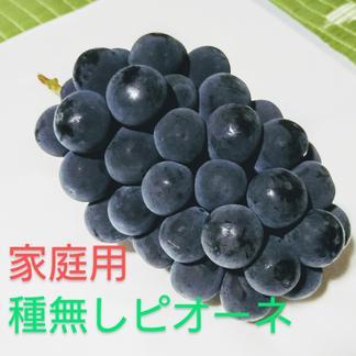 【家庭用】種無しピオーネ 3-5房 約1.8キロ 果物/ぶどう通販