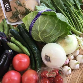 野菜ソムリエが選ぶ!朝採り野菜野菜詰合せセット 季節によりますが、約6種類ほど詰めさせていただきます^ ^ 野菜/セット・詰め合わせ通販