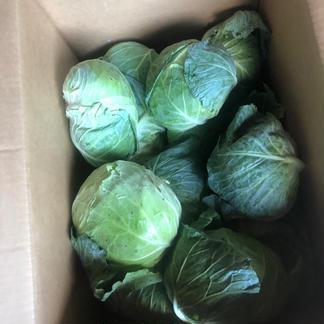 4個「おかえりモネ」の登米市よねやま町のキャベツ!期間限定品 4個、6キロ前後 野菜/キャベツ通販
