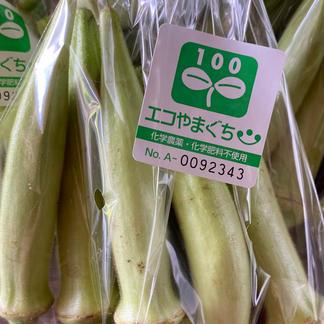 白オクラ 楊貴妃 800g 野菜/オクラ通販