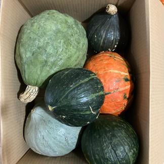砂塚の栗かぼちゃ いろいろ3個 おまけあり セット 3個 4.5kg以上をゆうパック80サイズ箱に入るだけ入れます! 野菜/かぼちゃ通販