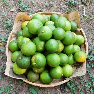 【自然栽培】搾汁用のお得な大分県特産の「かぼす」5kg(小さいものやキズ等で見た目が良く無い搾汁用のC品) 5kg 果物/柑橘類通販