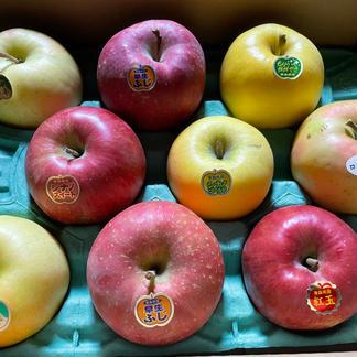 「送料無料」多品種詰め合わせBOX 約5キロ 12〜16玉 約5キロ 12〜16玉 果物/りんご通販