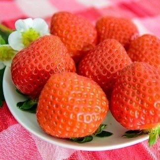 冷凍イチゴ「恋みのり」 800g入り 2袋(1.6kg) 果物/いちご通販