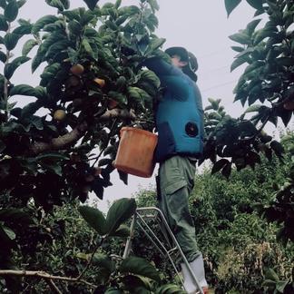 送料無料!![訳あり]和歌山県産たねなし柿4kg 約4kg 果物/柿通販