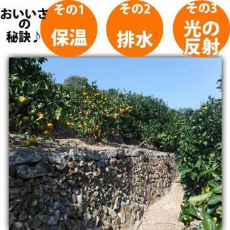 みかん 和歌山県有田産ジューシー果汁みかん5kgご家庭用 5kg 果物/みかん通販