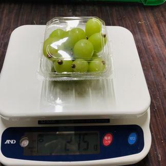 シャインマスカット約200g×4パック 少量小分け粒サイズ不揃い 数量限定 約200g×4パック 果物/ぶどう通販