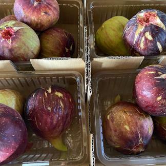 林柿園のいちじく うましずく 1.6-1.8kg 果物/その他果物通販