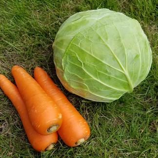 さくま農園「旬のお野菜おまかせセット」 約3.0~5.0㎏ 野菜/セット・詰め合わせ通販