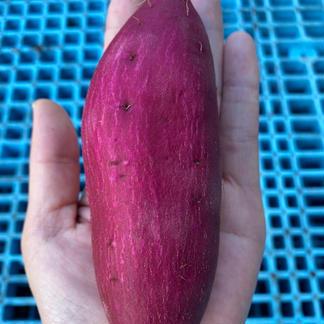 芋どんや【紅あずま 新芋 Sサイズ】 3kg 野菜/さつまいも通販