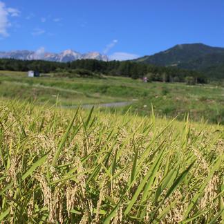 ゆめしなの10kg〈令和2年産〉長野県の標高の高い地域で栽培されているお米 10kg 米/米通販