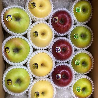 「送料無料」開設記念‼️多品種詰め合わせBOX 約3kg 9玉〜 果物/りんご通販