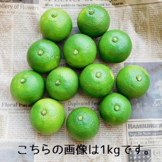 【自然栽培】まろやかな酸味♪農薬、肥料を使わずに育てた大分県特産の「かぼす」3kg(B品も含む無選別品) 3kg 果物/柑橘類通販