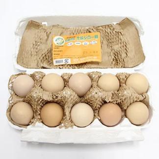 【10月24日受付まで送料無料】高知のブランド卵 土佐ジロー卵40個 40個 卵/鶏卵通販