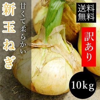 トロトロ新玉ねぎたっぷり10kg!数量限定!新タマネギ 10kg(9kg+1kgオマケ) 野菜/玉ねぎ通販