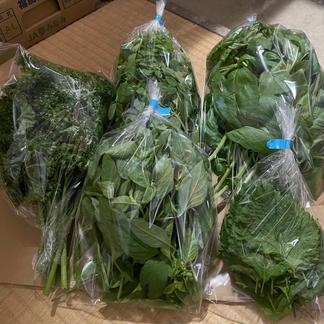 ハーブ詰め合わせセット ダンボールサイズ60 野菜/セット・詰め合わせ通販
