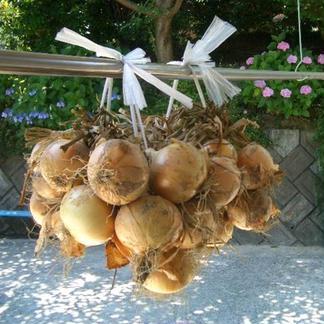 【吊るして長期保存!】つる付き淡路島たまねぎ(5キロ) 5Kg 野菜/玉ねぎ通販