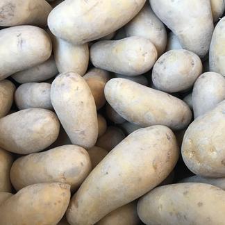 【農薬・除草剤不使用】メークイン 3㎏ 3kg 野菜/じゃがいも通販