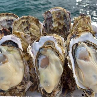 【訳あり】三陸直送!BBBQ用殻付き牡蠣加熱用80サイズ詰め放題(25個位) 25個位 魚介類/牡蠣通販