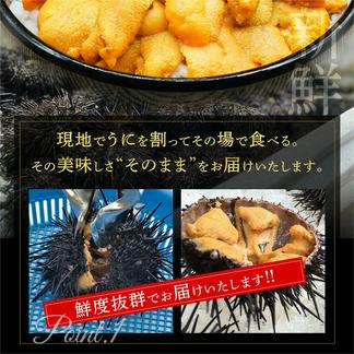 塩水生うに(キタムラサキウニ)100g 礼文島産 【送料無料】 100g 魚介類/ウニ通販