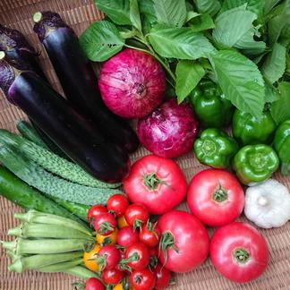 もり自然農園の無農薬旬野菜セット 【2~3人分】旬のお野菜約8種類の詰め合わせ 野菜/セット・詰め合わせ通販