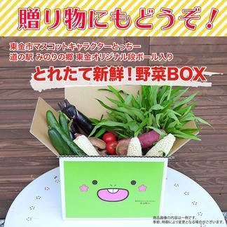 東金市マスコットキャラクター「とっちー」段ボールに入れてお届け!採れたて新鮮野菜BOX 5kg程度 野菜/セット・詰め合わせ通販