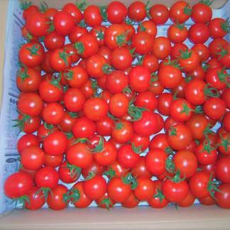 期間限定 特価キャンペーン 島根県産フルーツトマト 2kg入り 2キロ 野菜/トマト通販