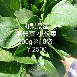 無農薬 小松菜 2キロ 野菜/その他野菜通販