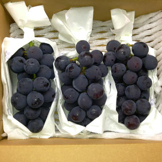 人に自然に優しく♫クロレラ栽培巨峰2キロ(6〜8房入り) 2kg(6〜8房入り目安) 果物/ぶどう通販