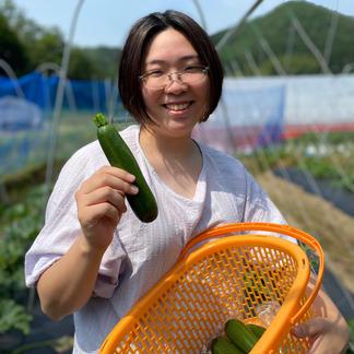 ズッキーニと万願寺とうがらしのセット ズッキーニ4本、万願寺とうがらし400g 野菜/セット・詰め合わせ通販