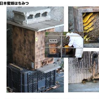 【球磨産】地蜂蜜 非加熱・無添加高濃度日本みつばち蜂蜜 150g x 3瓶 はちみつ/はちみつ通販