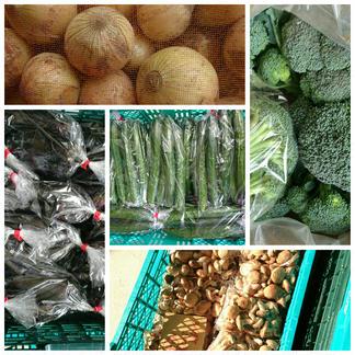 福袋野菜セットno.3 野菜/セット・詰め合わせ通販
