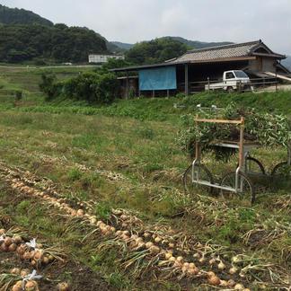 淡路島新玉ねぎ9kg 大玉【訳あり】 9kg 野菜/玉ねぎ通販