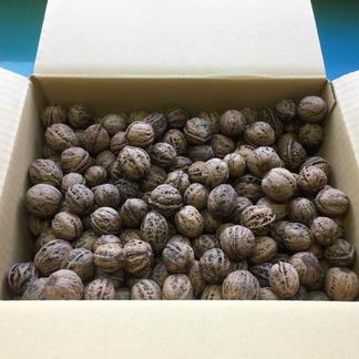 雪鬼胡桃 3kg 果物/その他果物通販